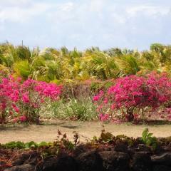 Lush landscape, Mauritius